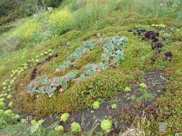 Cultivo en espiral ecologico