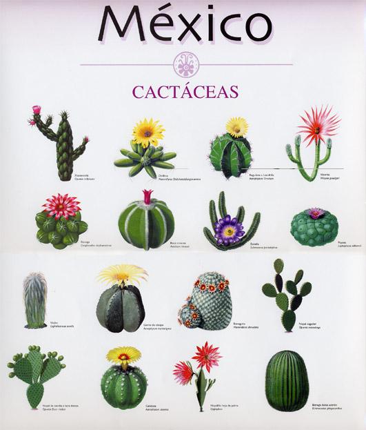 Cactáceas mexicanas