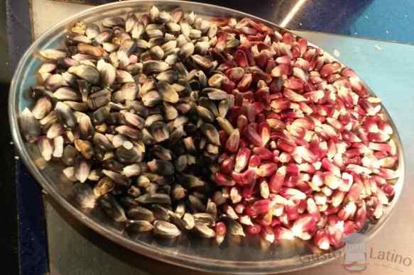 Variedades maíz endémico mexicano